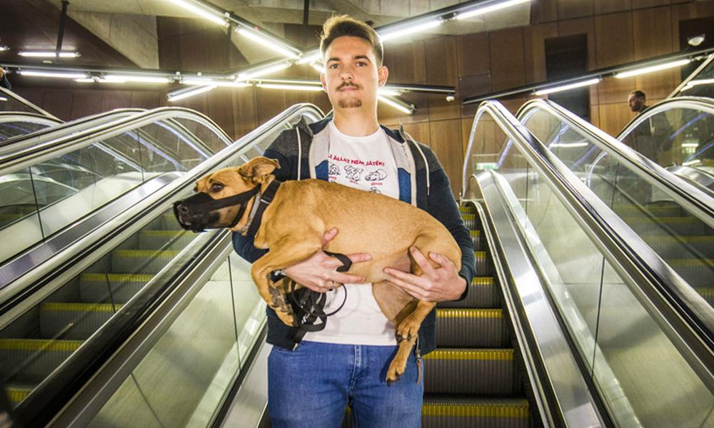 Kutyád van és tömegközlekednél?