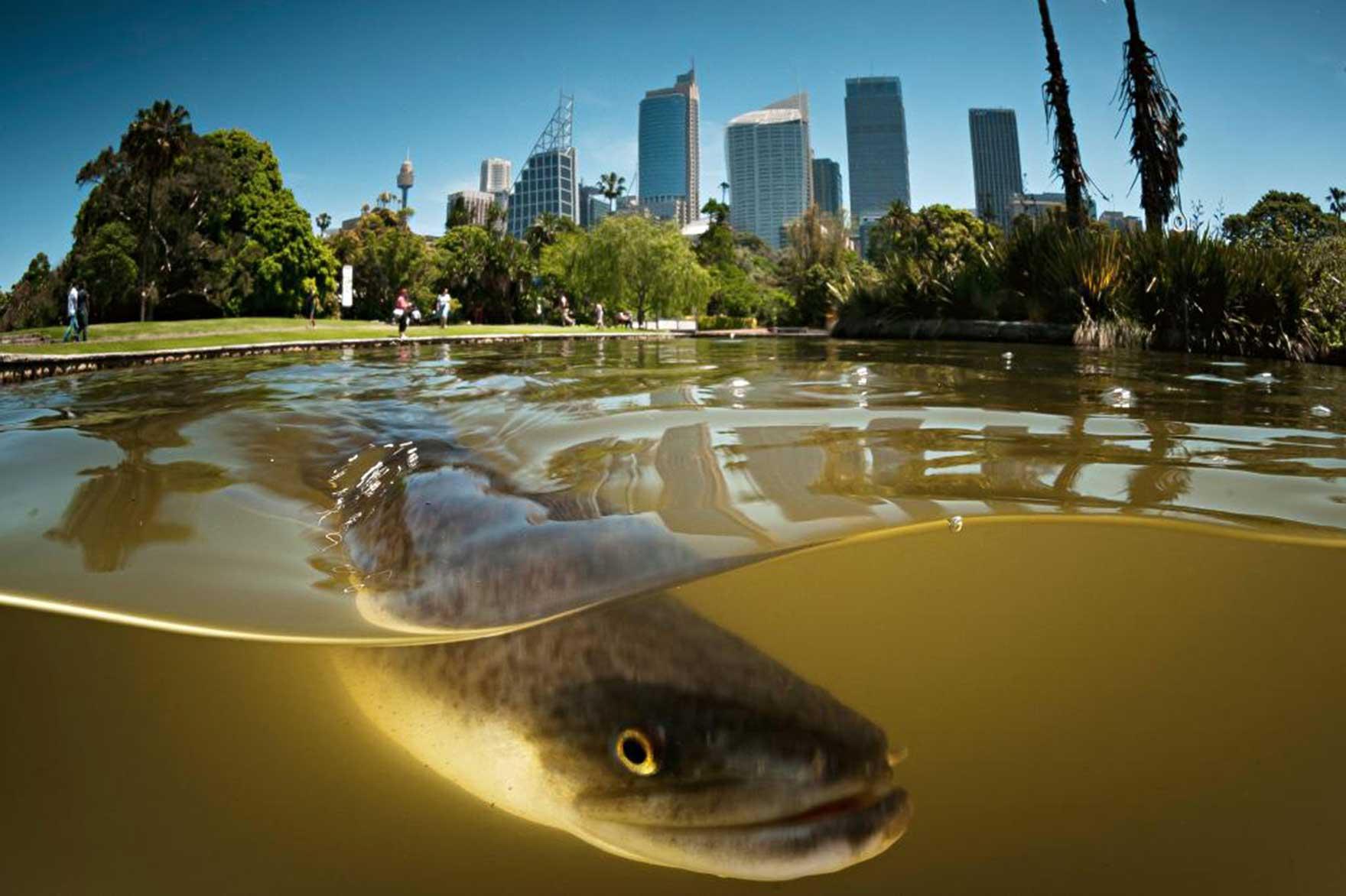 Ausztrália arca 2. rész - Állatok és emberek - Nemigen! Magazin